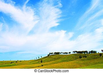 zielone pole, i błękitny, niebo
