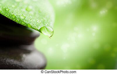 zielone tło, zdrój, z, liść, i, woda kapią