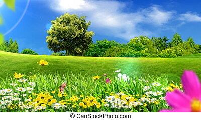 zielony, łąki, i, kwiaty