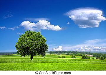 zielony, środowisko