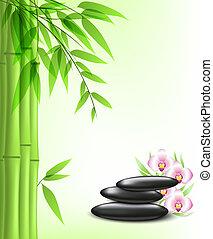 zielony, bambus, i, zdrój, kamienie