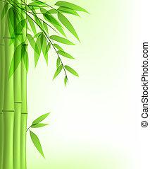zielony, bambus