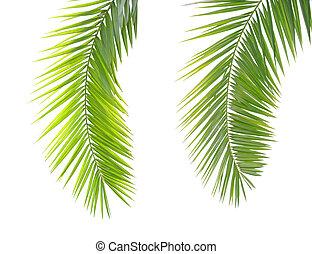 zielony, dłoń liść