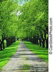 zielony, dróżka, drzewo