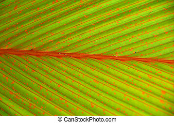 zielony, dropiaty, dłoń, roślina, liść, closeup