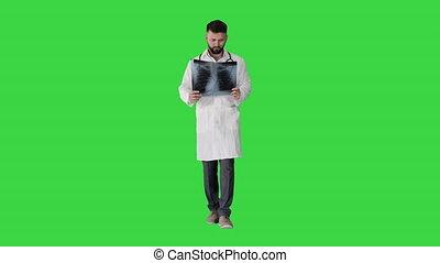 zielony, ekran, doktor, patrząc, medyczny, płuca, key., ...
