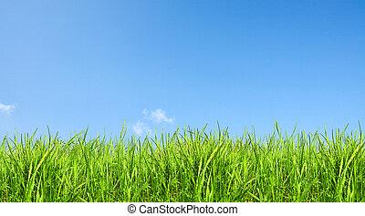 zielony, jasny, trawa, niebo