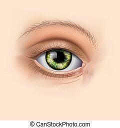 zielony, kobieta przypatrują się, do góry szczelnie