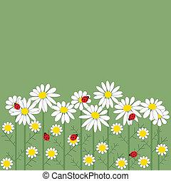 zielony, kwiaty, chamomile, tło