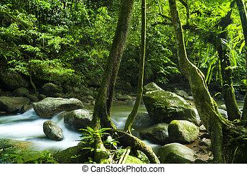 zielony las, i, potok