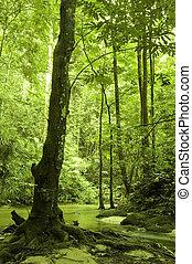 zielony las, i, rzeka