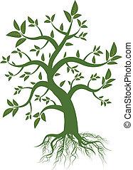 zielony liść, drzewo