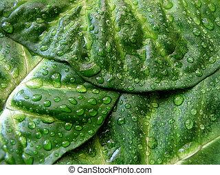 zielony liść, struktura