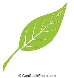 zielony liść, sylwetka