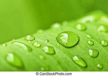 zielony liść, tło, krople deszczu