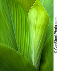 zielony liść, tło