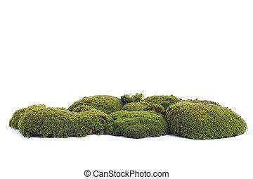 zielony, mech