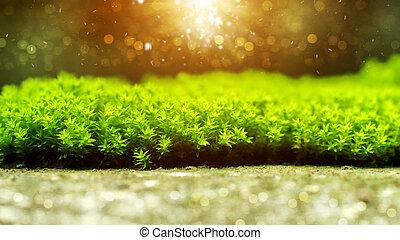 zielony, moss.