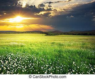 zielony, mountain., łąka