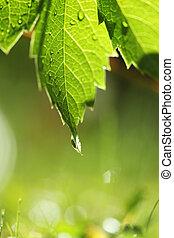 zielony, na, trawa, liść, mokry