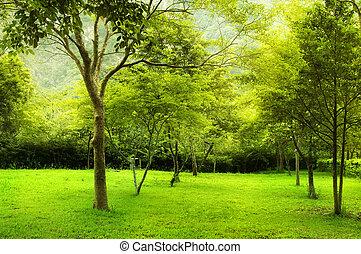 zielony park, drzewa