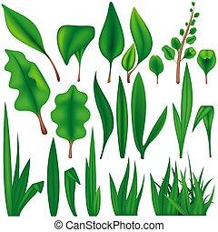 zielony, rośliny, komplet