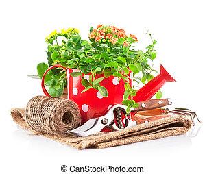 zielony, rośliny, w, czerwony, konewka, z, ogrodowy instrument