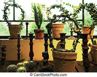 zielony, rośliny, w, glina, garnki, dekorowanie, niejaki, okno