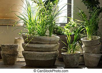 zielony, rośliny, w, stary, glina, garnki
