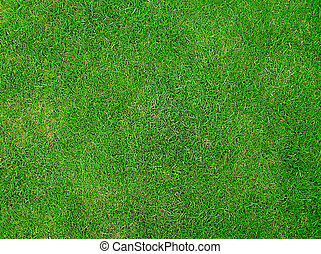 zielony, zielona trawa