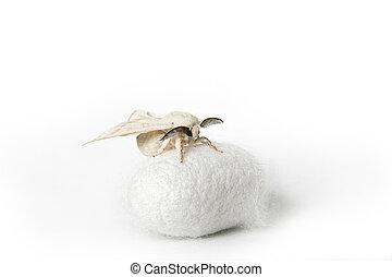 zijdene nachtvlinder, op, zijde, cocon
