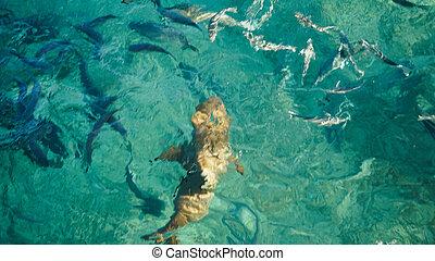 zijn, haai, visje, rif, zakelijk, bijzonder, duidelijk, school, concept, turkoois, ocean., uniek, anderen
