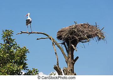 zijn, oud, nest, boompje, ooievaar, vogel