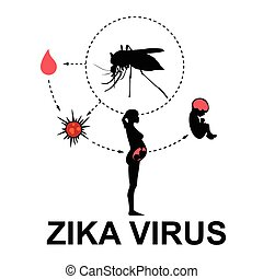 Zika virus, vector