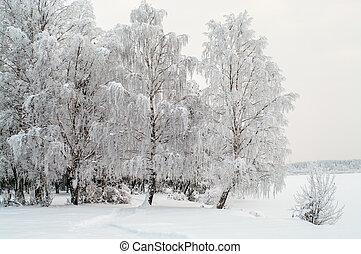zima, śnieg, pora, jezioro, brzozy, brzeg, pokryty, biały
