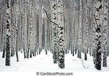 zima, brzozowe drzewa