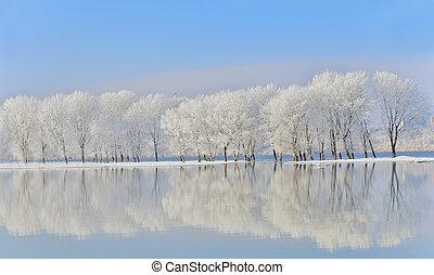zima drzewa, nakrywany z mrozem