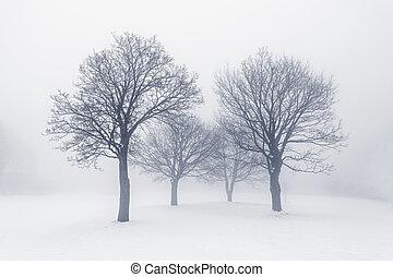 zima drzewa, w, mgła