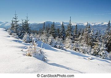 zima drzewa