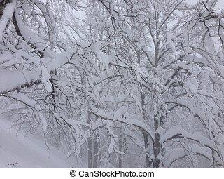 zima drzewo, śnieg, tło
