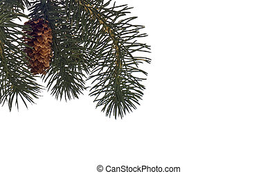 zima, drzewo sosny, tło, albo, brzeg