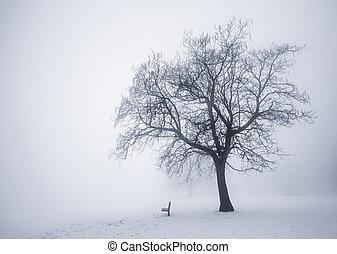zima drzewo, w, mgła