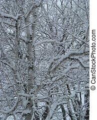 zima, gałęzie