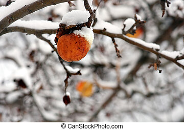 zima, jabłko, w, drzewo