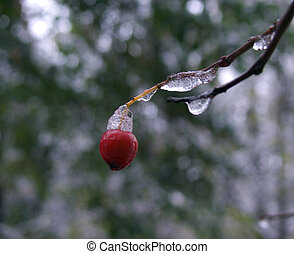 zima, jagoda