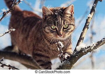 zima, kočka, filiálka, sněžný, mourek, strom, mládě