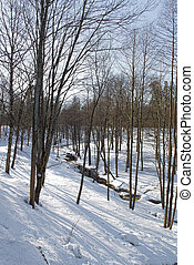 zima krajinomalba, sněžit