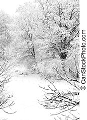 zima, krajobraz, śnieg nakrył drzewa