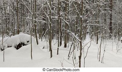 zima krajobraz, drewno, snow.