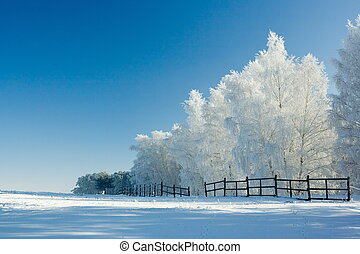 zima krajobraz, i, drzewa